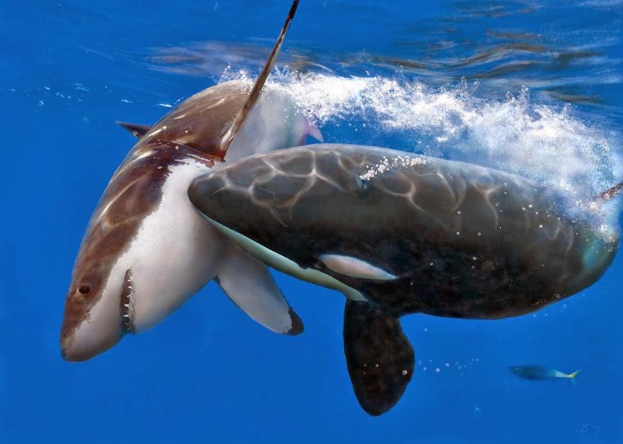 Orca Vs Hai