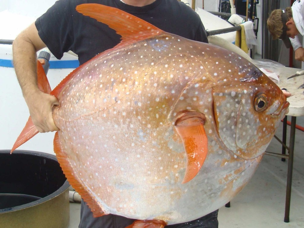 First fully Warm Blooded Fish discovered deep in the ocean