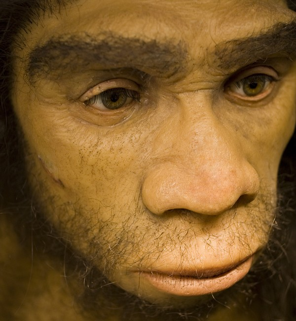 Oldest Neanderthal DNA provides clues to human origins