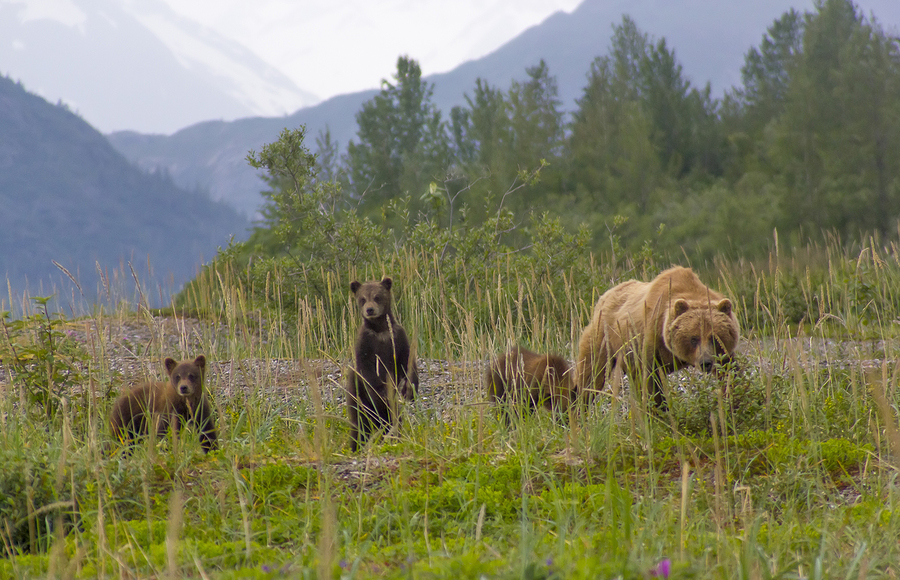 Glacier National Park cyclist killed by grizzly bear