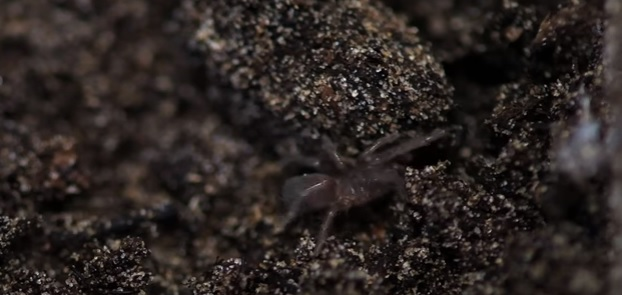 Super rare tarantulas swarm zoo [VIDEO]