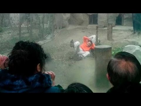 Video: Tiger Kills a man in Delhi zoo
