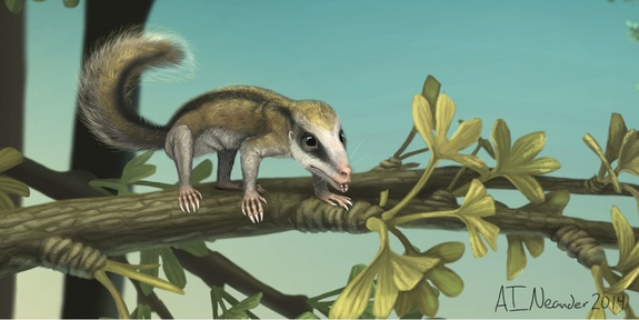 Fossils of shrew-sized mammals found in China dates back 160 million years