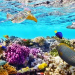 Is the Great Barrier Reef now extinct?