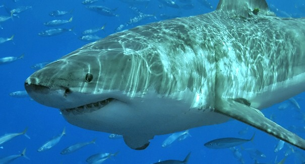 Sharks attack more people in Hawaii and here's why