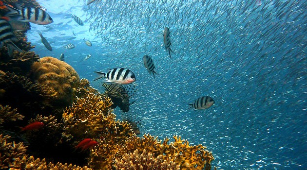 Coral reefs: Bleaching and its devastating effects on reef ecosystems