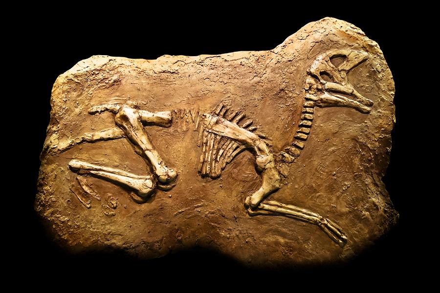 Pass the prehistoric pain killers – dinosaurs had arthritis too