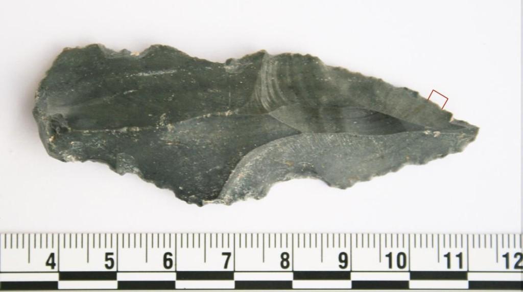 Caveman diet utilized tools 250,000 years ago