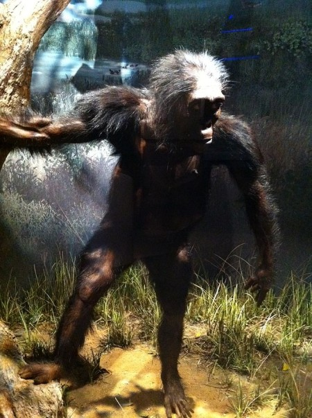 Lucy may have been more chimp than human new study suggests