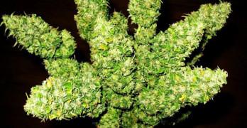 Scientists shocked by marijuana discovery